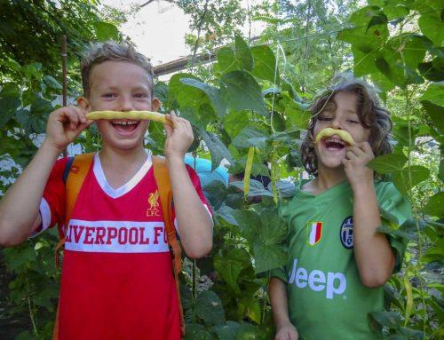 Leac bun pentru trup, minte și suflet: grădina LTN – Capitolul II : iulie, roadele verii